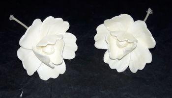 Sola Magnolia