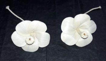 Sola Hibiscus