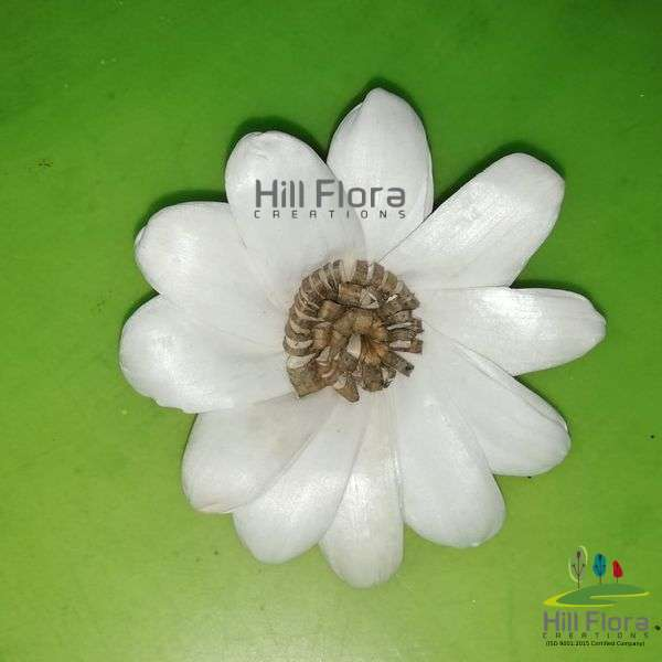 77227 SOLA PREMIUM FLOWER(1QTY=100Pcs)